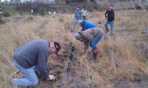 Driftwood Keys Planting