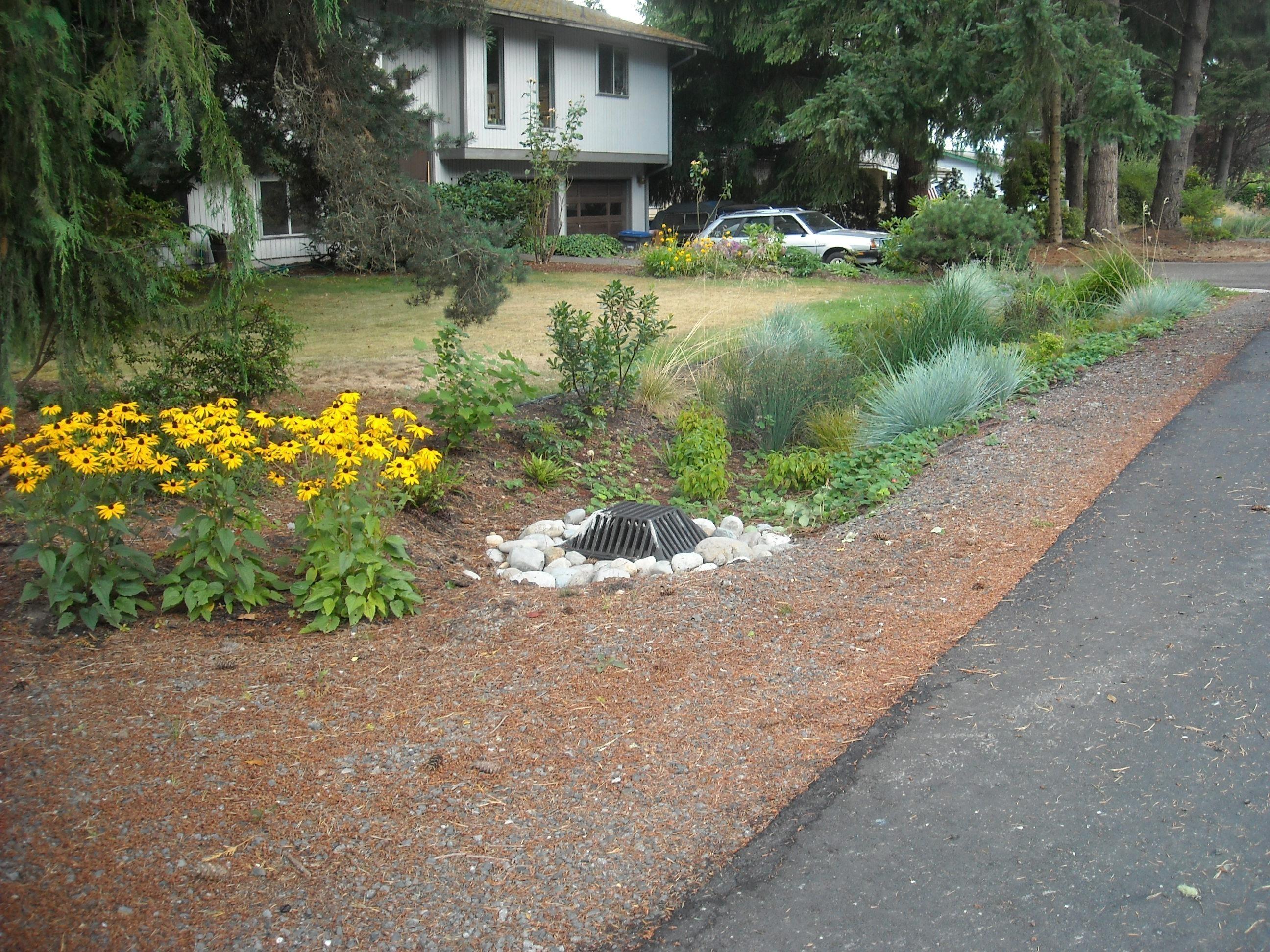 Rain garden on NW Brookwood Lane