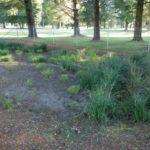 Rain Garden at Village Green Golf Course