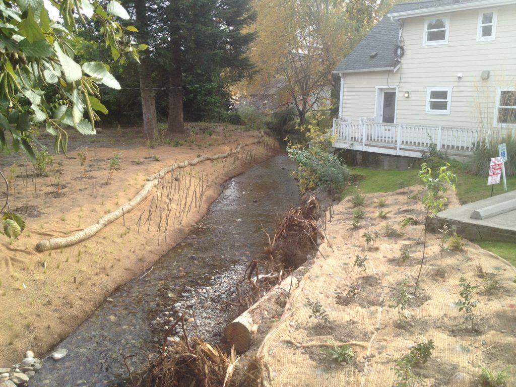 backyard habitat grant planting and stream restoration 2