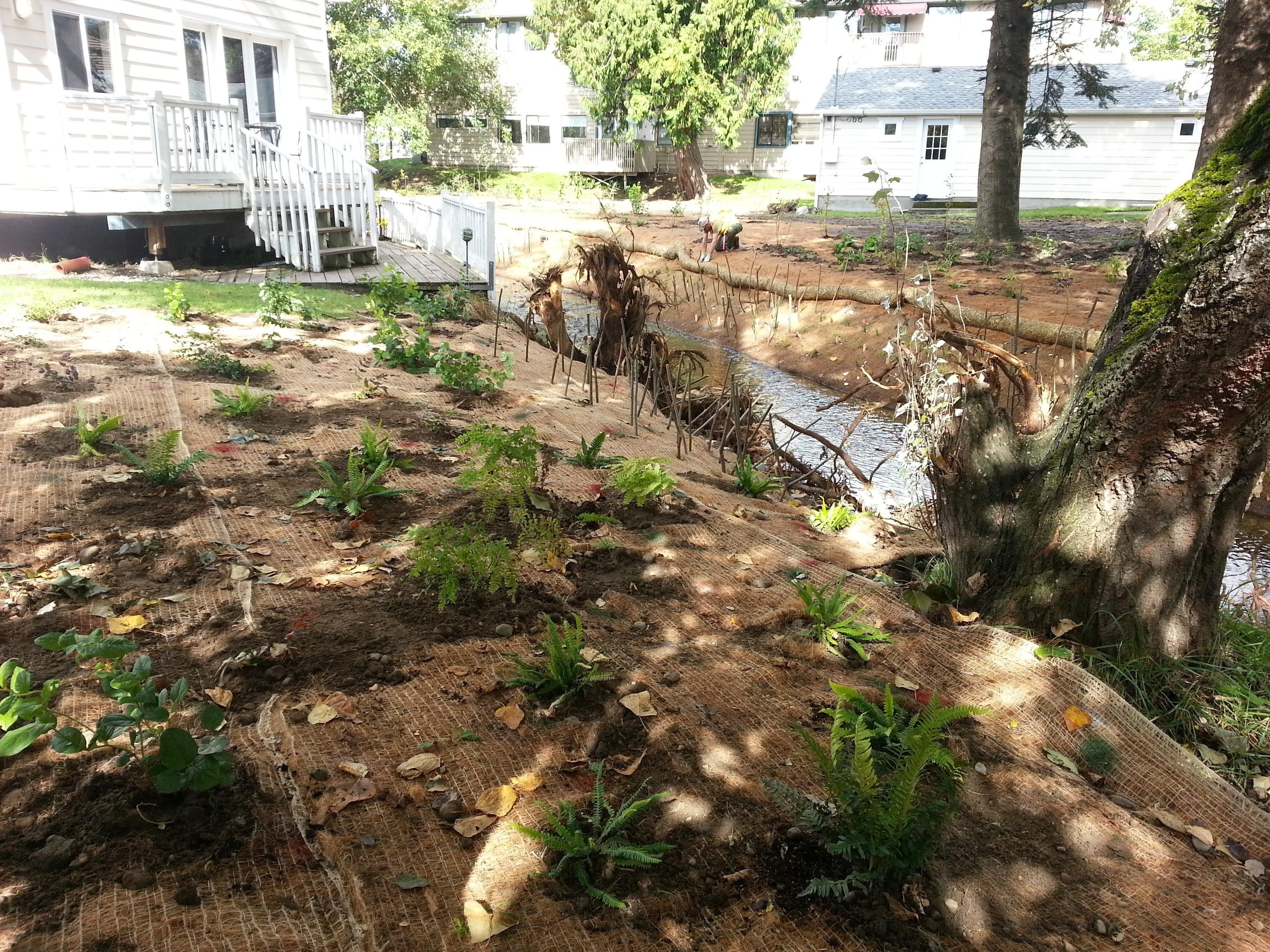 Backyard habitat grant planting and stream restoration.