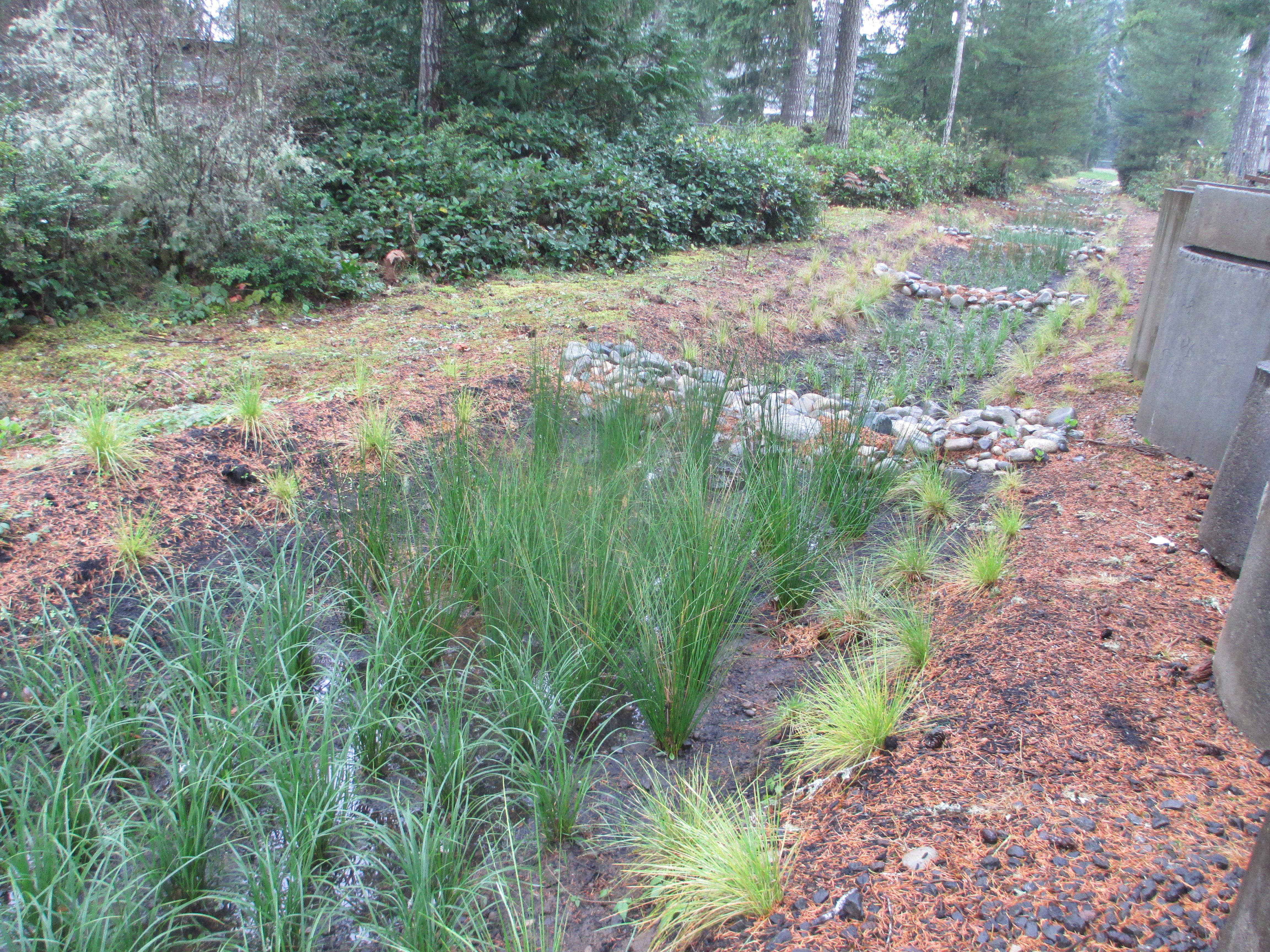 Bioretention swale behind the County Annex