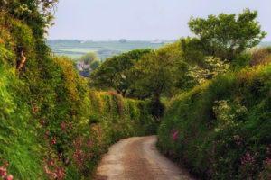 Flowering Hedgerow