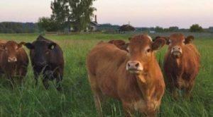 Country Living Expo and Cattlemen's Winterschool